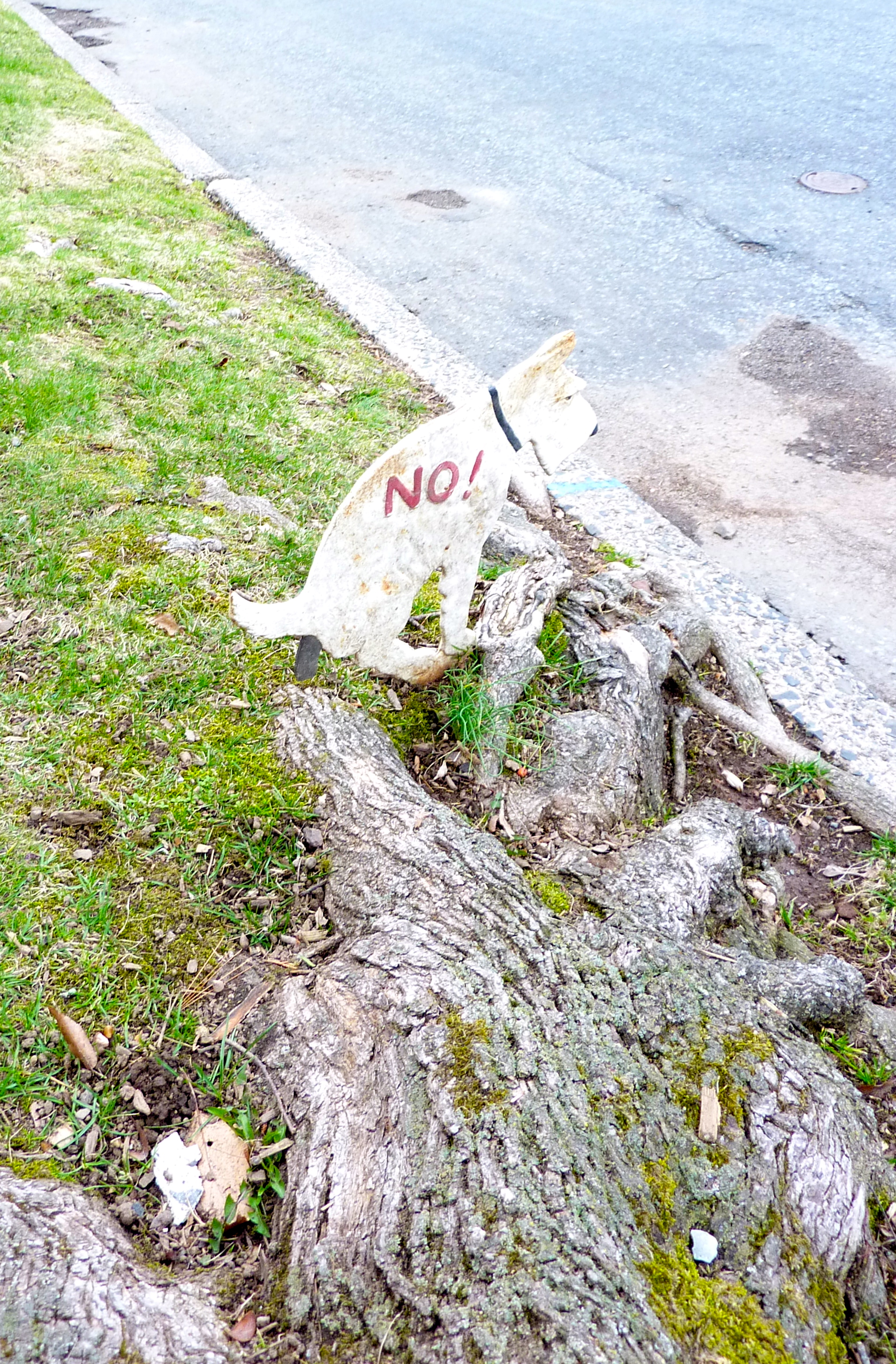 Deterrents For Dogs From Eating Poop