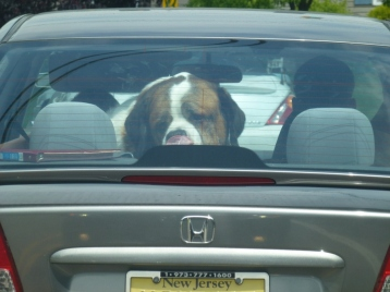 Pets in the Car